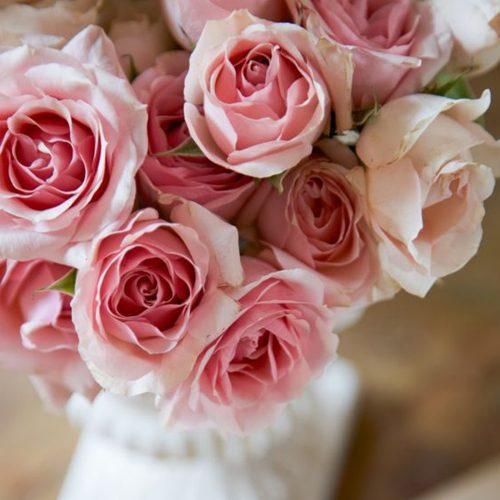 Trandafiri Roz Pentru Acasa
