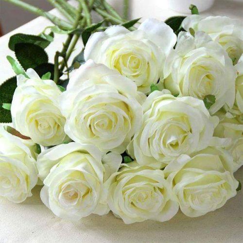 Trandafiri Albi Pentru Acasa