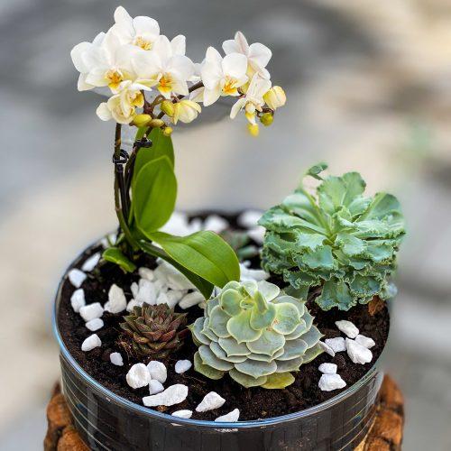 Terariu Sticla cu Orhidee si Plante Suculente