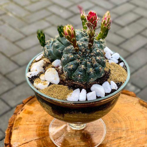 Terariu Sticla cu Cactus